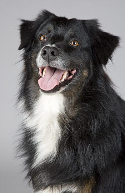 adorable-animal-canine-220938